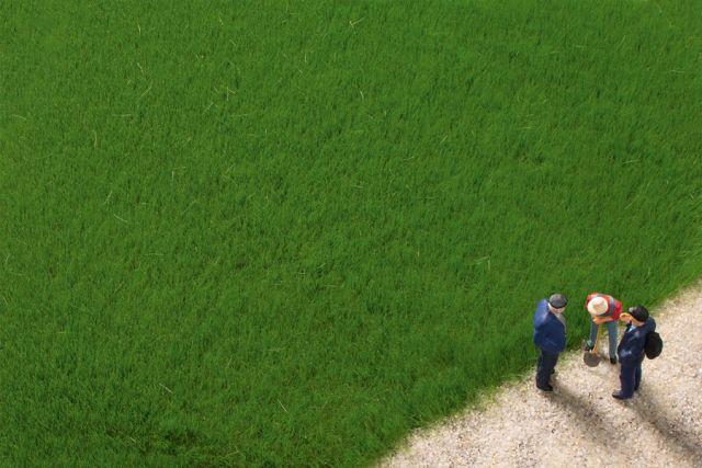 Auhagen 75615 <br/>Grasfasern dunkelgrün 4,5 mm